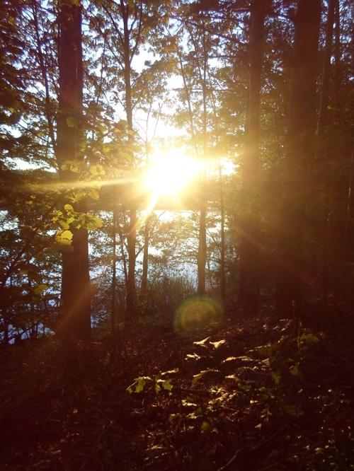 Podziwiajmy piękno przyrody każdego dnia