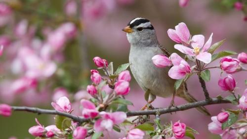 Wszyscy czują już wiosnę