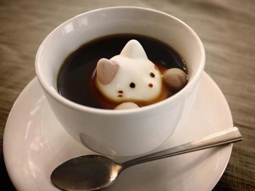 Miaucząca kawa