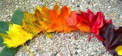 Odcienie jesieni